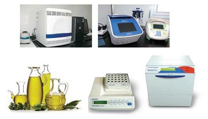 转基因食品检测